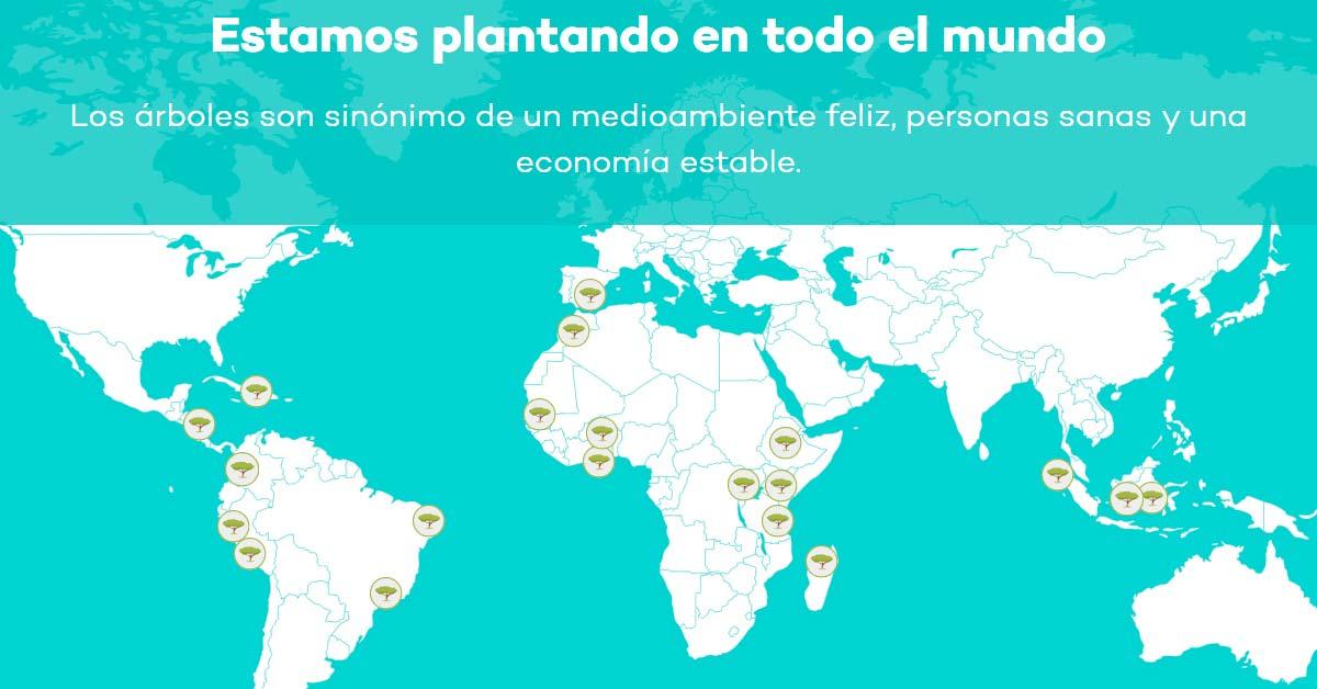 El buscador Ecosia planta árboles en todo el mundo - Alerta Emprendedora Overflow.pe